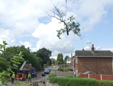 Removing Tree With Crane